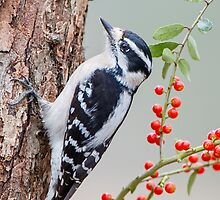 Downy Woodpecker with Berries in Background by Bonnie T.  Barry