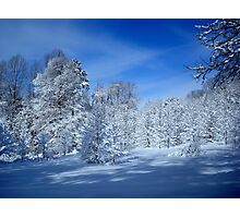 Winter Trees ^ Photographic Print