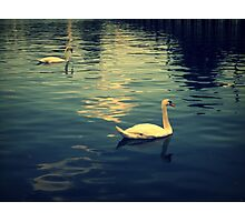 Two Swans Photographic Print