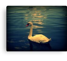 Swan in the River Canvas Print