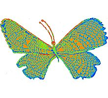 hippie butterfly Photographic Print