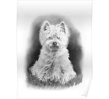 West Highland White Terrier, Westie Dog, Pencil Drawing Poster