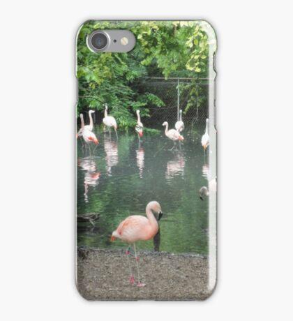 Flamingoes iPhone Case/Skin