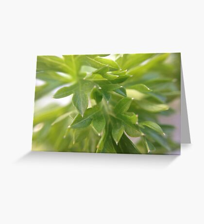 Closeup nature Greeting Card