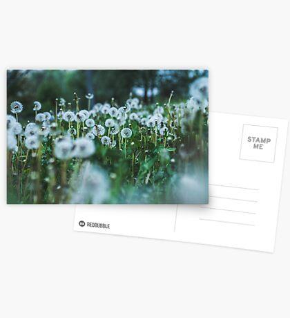 dusky dandelions Greeting Card