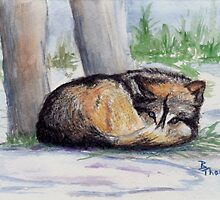 Wolf At Rest by Brenda Thour