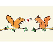 Tickle Tickle Little Squirrel Photographic Print