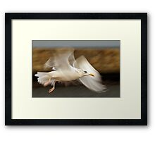 Seagull in flight over Whitby  Framed Print