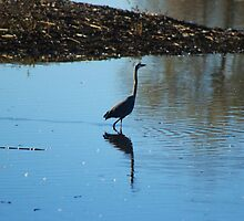 Heron At Grey Lodge by Laurie Puglia