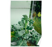 Broccoli In The Garden Poster