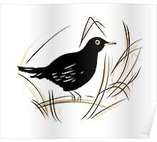 Male Blackbird Poster