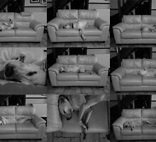 Oscar's Ubiquitous Sleeping by Thierry Vincent