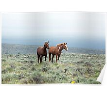 Wild Horses - South Steens Herd No. 1 Poster