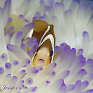 clown fish by Jenifer
