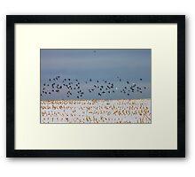 Flying Pigeons Framed Print
