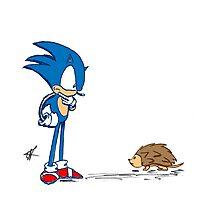 Hedgehogs Photographic Print