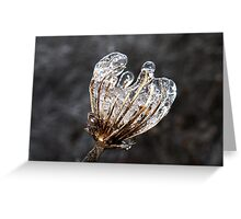 Icy Queen Anne's Lace Greeting Card