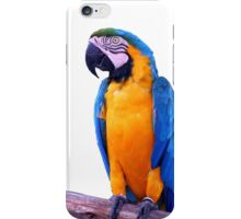 Perroquet iPhone Case/Skin