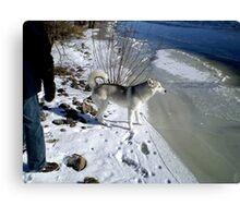 Husky Sibérien Canvas Print