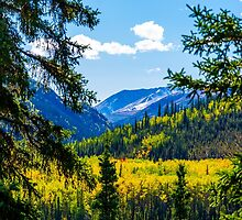 Denali - Golden Valley 2 by Mary Carol Story