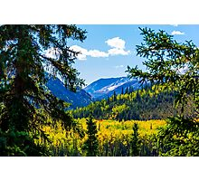 Denali - Golden Valley 2 Photographic Print