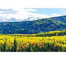 Denali - Golden Valley Photographic Print