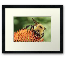 Bee Eyes Framed Print