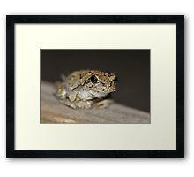 Frog Smile Framed Print
