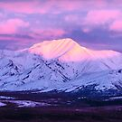 Denali - Alpenglow 5 by Mary Carol Story