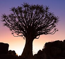 Sunset Quiver Tree, Garas Park, Namibia by SeeOneSoul
