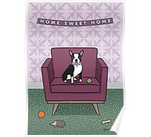 Boston Terrier Sitting on Purple Chair Poster