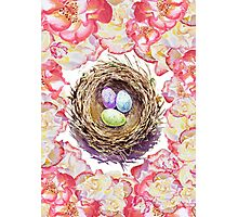 Bird Nest And Roses Photographic Print