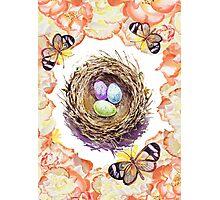 Bird Nest Roses And Butterflies Photographic Print