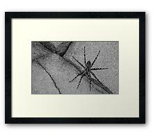 Wolf Spider 2 Framed Print