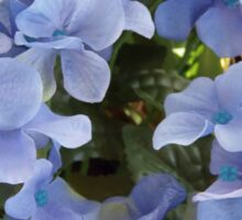 Blue Plumbago Sticker