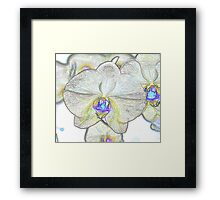 Abstract Beautiful Orchid In Pastel Colors Take 1 Framed Print