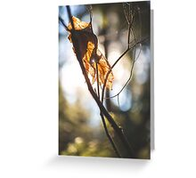 Parched Pinhole Greeting Card