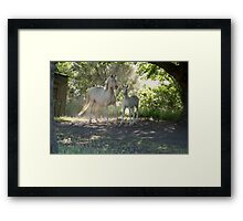 Cremello mare and foal 1 Framed Print