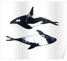 Killer Whale and dolphin. Black-and-white illustration Poster