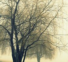 Weeping willow by francelal