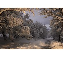 State of winter Photographic Print