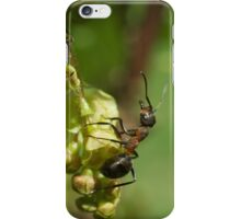 Ants  iPhone Case/Skin