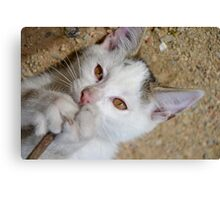 Kittens love to play Canvas Print