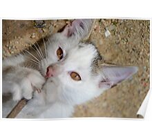 Kittens love to play Poster