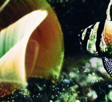 The Magic fish Sticker