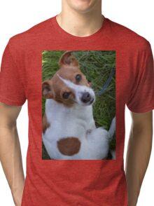 Jackahuahua Tri-blend T-Shirt