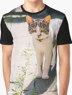 Tabby and White Cat In The Sun Graphic T-Shirt