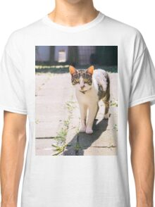Tabby and White Cat In The Sun Classic T-Shirt