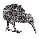 Kiwi by weirdbird