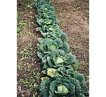 Cabbage Row Photographic Print